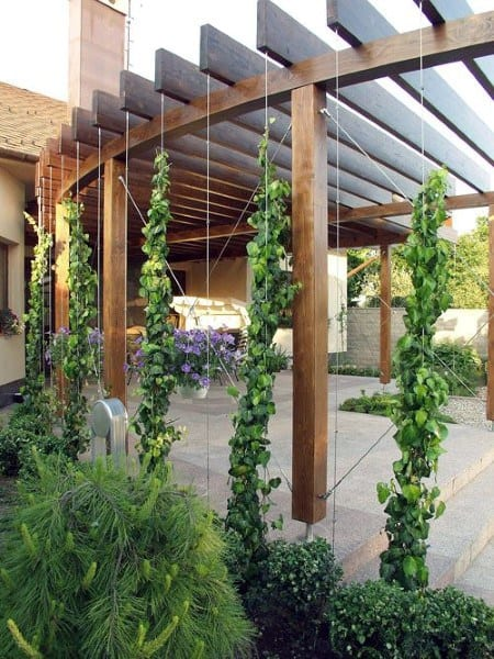 Wood Pergola Ideas With Green Climbing Plant