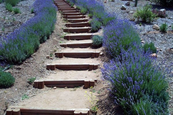 Wooden Walkway Backyard Design