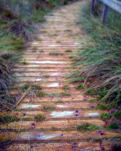 Wooden Walkway Backyard Ideas