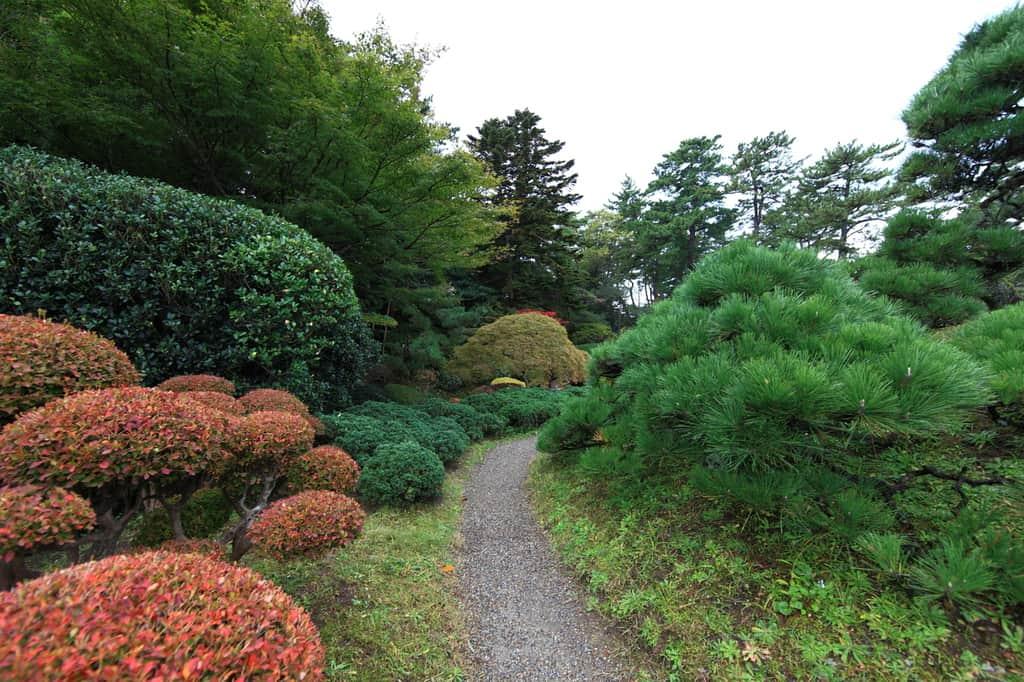 woodland garden 2