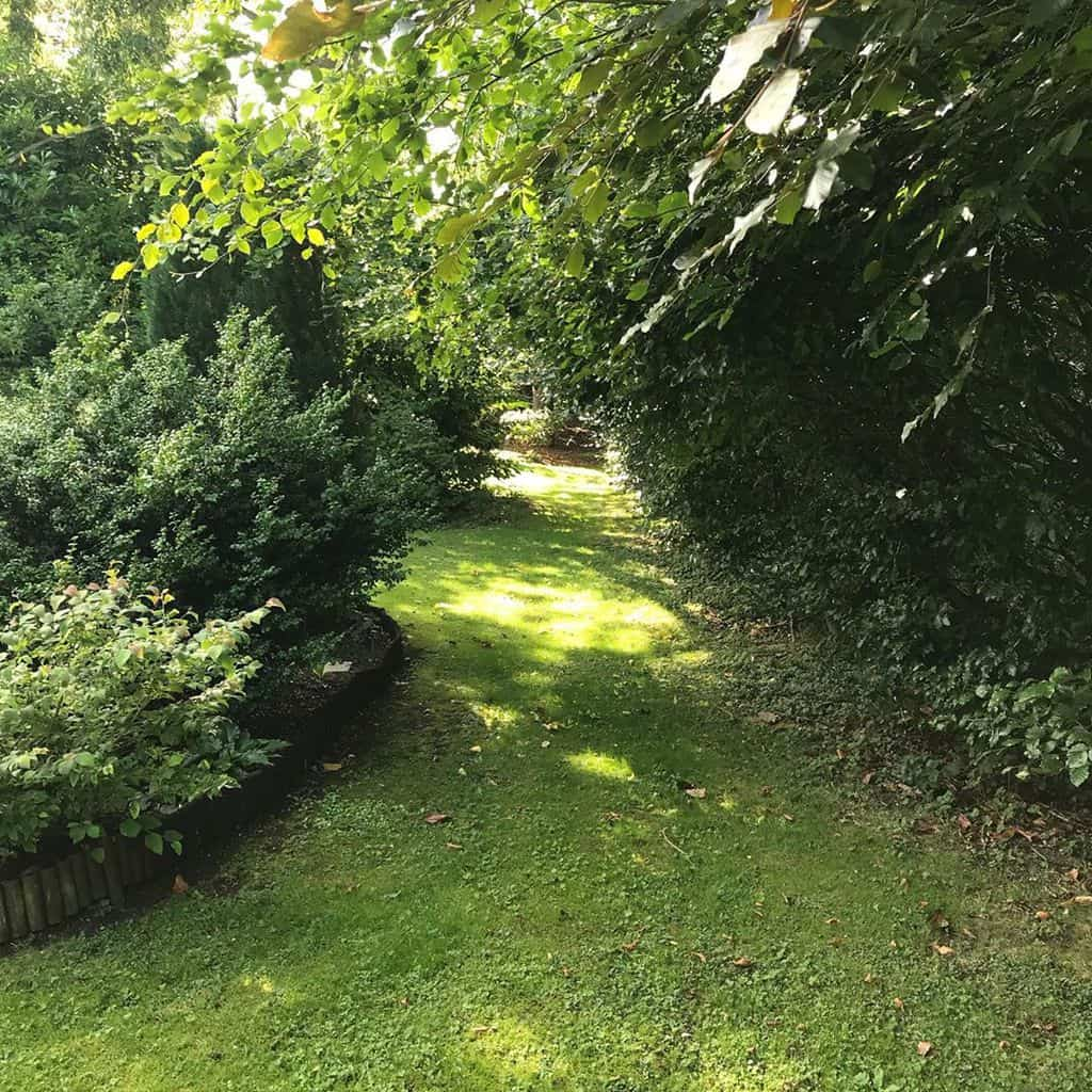 woodland garden shade garden ideas amateurgardener1