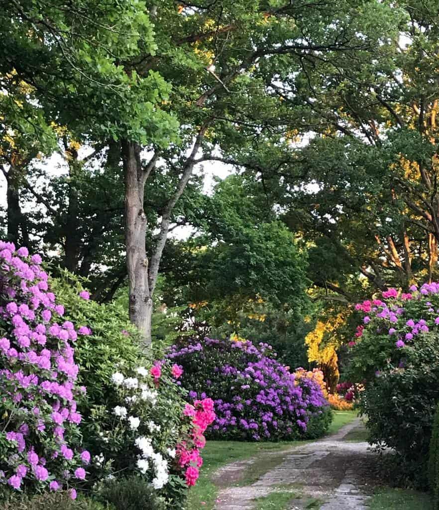 woodland garden shade garden ideas jardindefreville