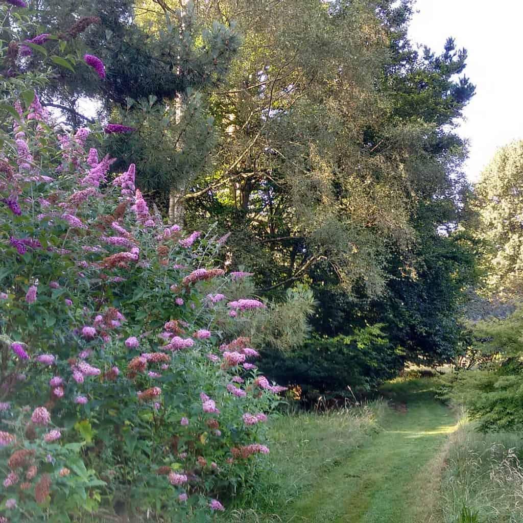 woodland garden shade garden ideas moorsmeadow