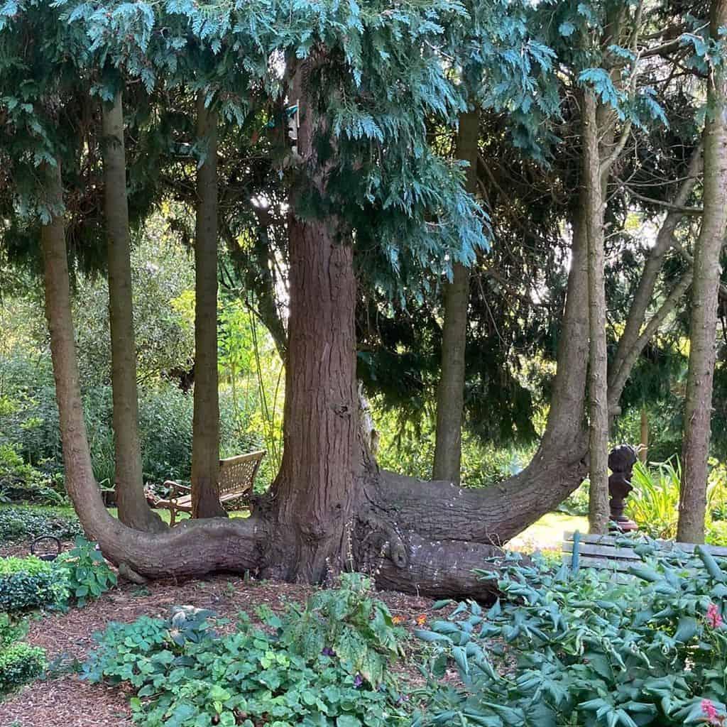 woodland garden shade garden ideas thegardeningbubble