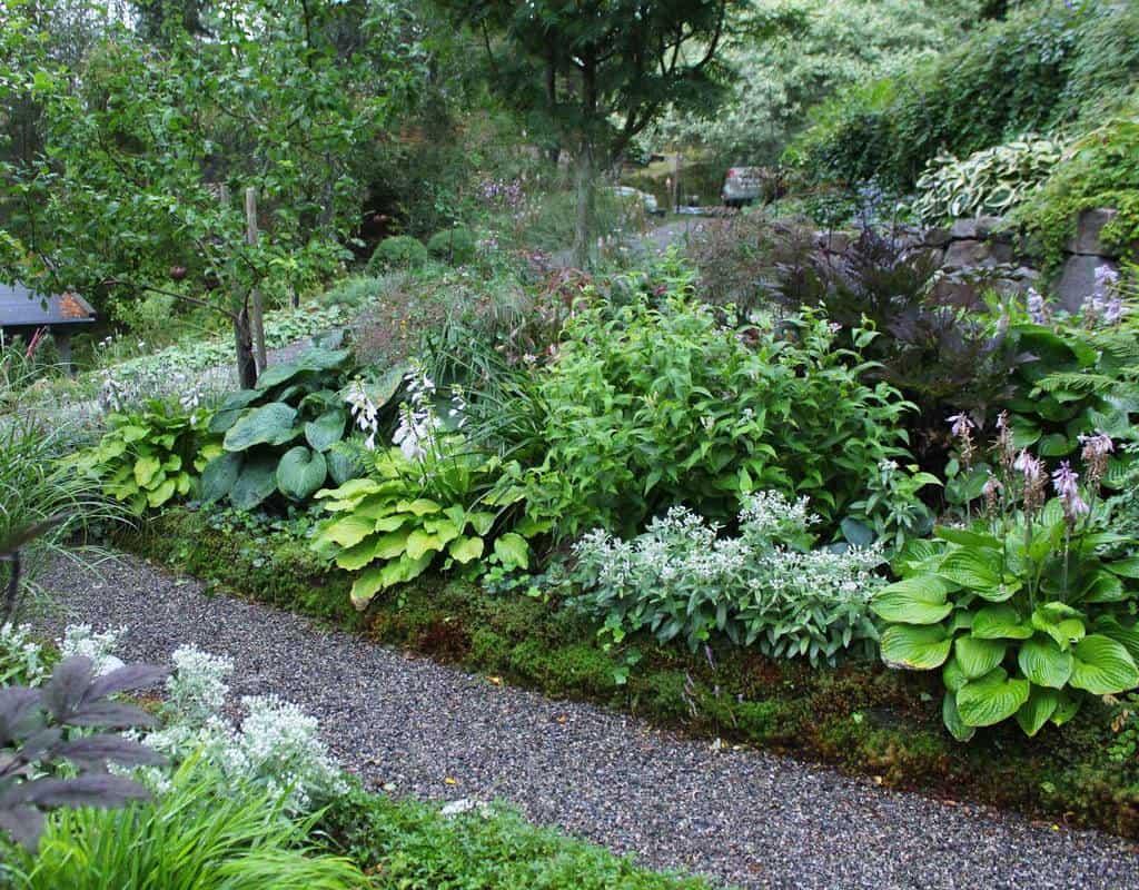 woodland garden shade garden ideas themoosegarden