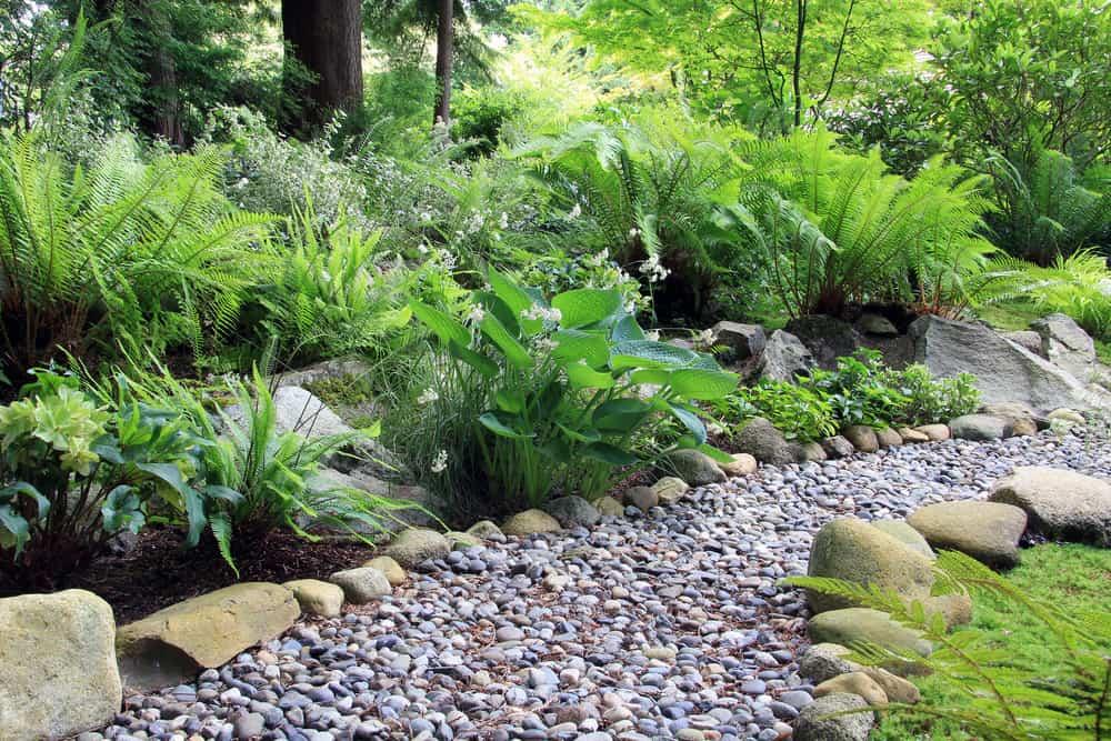 woodland garden shade garden ideas